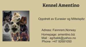 Kennel Amentino