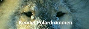 Kennel Polardrømmen