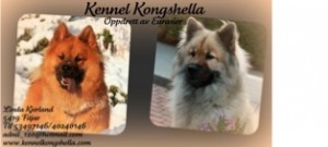 Kennel Kongshella