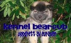 Kennel Bearcub