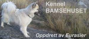 Kennel Bamsehuset